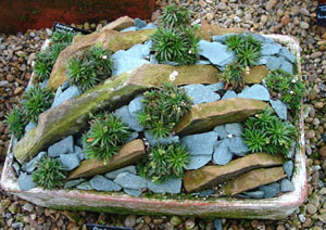 garden design with succulent rock garden ideas photograph bits of stone can b with small garden - Garden Ideas Using Stones